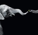 Vorbild Elefantenrüssel - ein Hightech-Helfer für Industrie und Haushalt