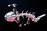 Roboter-Echse gibt Einblick in die Evolution