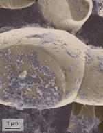 In der Rasterelektronenmikroskopie-Aufnahme sind kleine Details der Elektrode zu sehen.