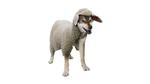 Der Wolf im Schafspelz ist nicht allein
