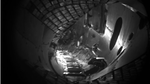 Stellerator Plasma
