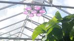Pflanzenbeleuchtungen im Aufschwung