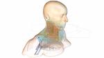 Strahlung à la carte