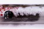 Vielversprechendes, flexibles Halbleitermaterial entdeckt