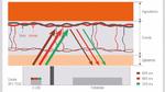 Bild 1: Ein PPG-Sensor sendet grünes, rotes oder infrarotes Licht aus, welches Haus, Gewebe und Blutgefäße durchstrahlt und auf den Detektor reflektiert wird. Weil Blut Licht absorbiert, lässt sich aus dem Detektorsignal die Herzfrequenz ableiten.