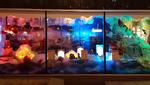 Interaktives Weihnachts-Schaufenster