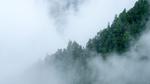 Den Nebel lichten