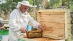 NB-IoT gegen Bienensterben