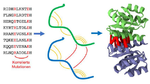 Proteinstruktur mittels Big Data vorhergesagt