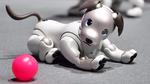 Roboterhund 'Aibo' kehrt zurück