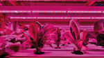 LED – die Zukunft der Horticulture-Beleuchtung