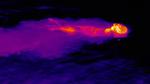 Seeotter im Wärmebild
