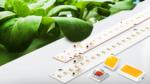660 nm für Pflanzenwachstum