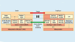 Zwischen Wireless-Power-Sender und -Empfänger bestehen zwei Kanäle, einer zur Energieübertragung und einer für die Kommunikation
