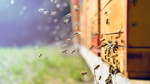 Kommt der High-Tech-Bienenstock?