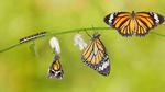 Agile IT – die Kunst des Wandels