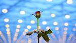 Problemlose Umstellung auf LEDs für die Pflanzenaufzucht