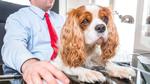 Immer mehr Unternehmen erlauben Bürohunde