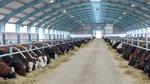 Signify verstärkt sich im Agriculture-Bereich