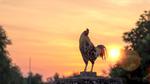 Ein Hahn am frühen Morgen.
