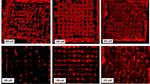 Zell-Lebensraum aus dem 3D-Drucker