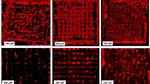 Forscher entwickeln neues Bioprinting-Verfahren