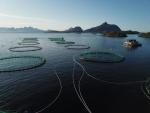 Fischfarm...