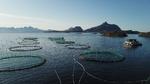 Stromspeicher halbiert Fischfarm-Energiekosten