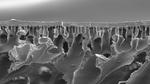 Polymer-Membranen erleichtern Sauerstoffaustausch