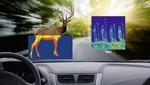 Intelligentes Straßenradar schützt vor Wildunfällen