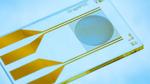 Graphenoxid-basierter Schnelltest