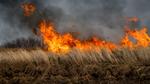Mit Hightech und Drohnen gegen Buschbrände