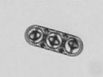 Mikroskopiebild des oben gezeigten Zwei-Komponenten-Mikrovehikels.