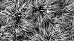 Zinn macht Superkondensatoren besser