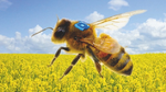 Die Sensor-Bienen kommen