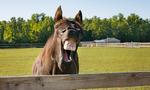 Pferd schneller als Daten-Übertragung