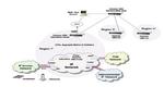 VoIP-Qualität sichern mit Hammer XMS 2.0 von Empirix
