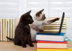 Digitalisierung für Hund und Katz