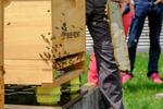 Smartes Zuhause für Bienen
