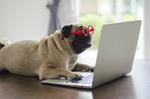Deutsche sind täglich acht Stunden online