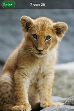 App führt durch Tierpark Hagenbeck