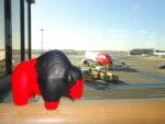 Es kann losgehen: Der Buffalo-Büffel ist wohlbehalten in Schweden gelandet und fragt sich schon, ob er Wölfe und Bären gegenübertreten muss (Foto: Buffalo)...
