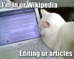 Das LOLcat-Foto und seine Beziehung zum Unerreichten